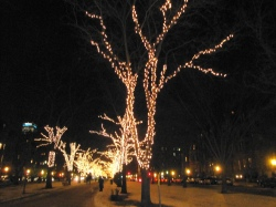 Delicate strands of lights are precisely coiled trees of Comm Ave mall