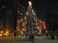 Boston's official Christmas tree at Common