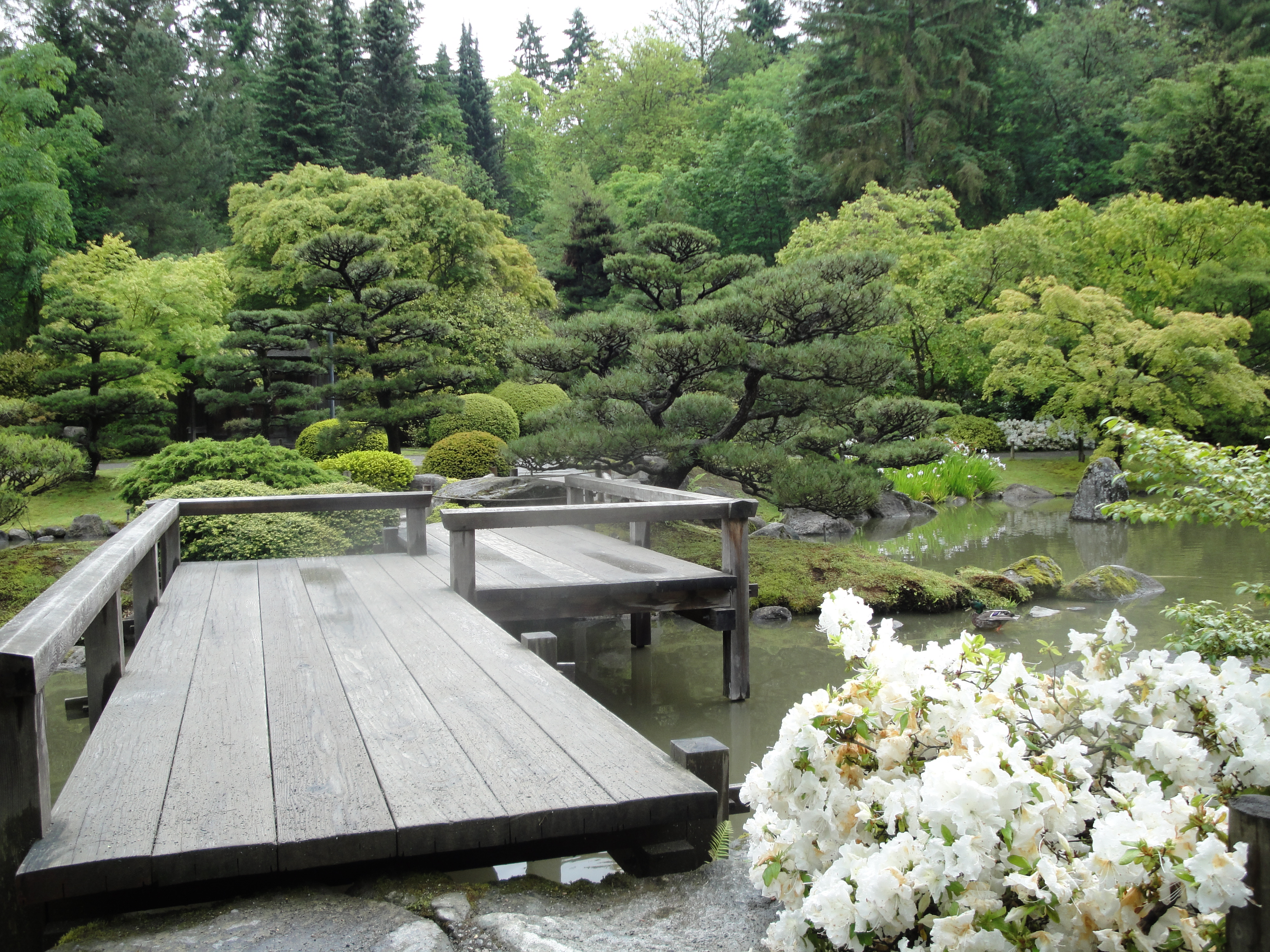 Seattle Japanese Garden: Travel Hungry In The Cosmos