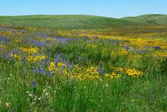 wild-flowers-alberta-prairie-www.dreamstime.com